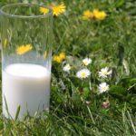 Kalorier i Mælk