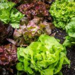 Kalorier i Blandet Salat